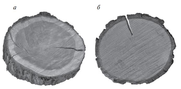 Ядровая и заболонная древесина