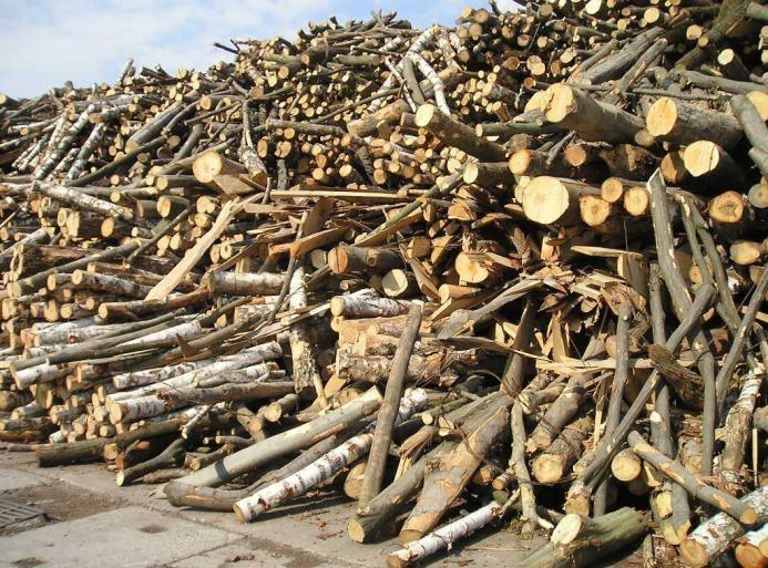 Фото необработанной древесины