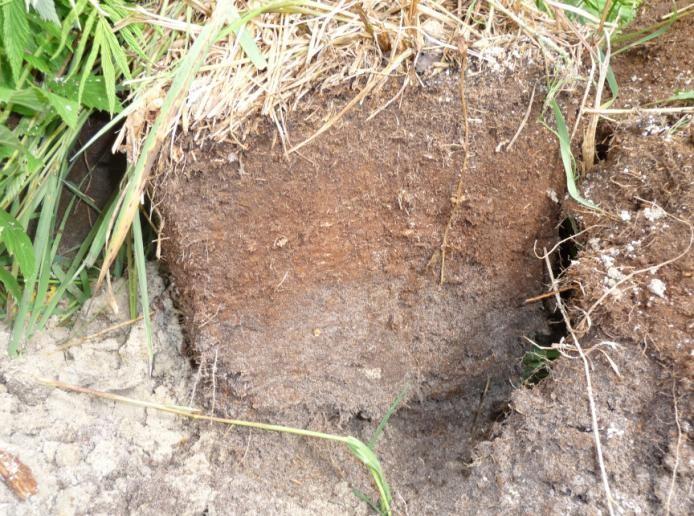 Торфяной среднеразложившийся горизонт дерново- подзолистой грунтово-оглеенной почвы