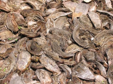 Скорлупа кокосовыхорехов