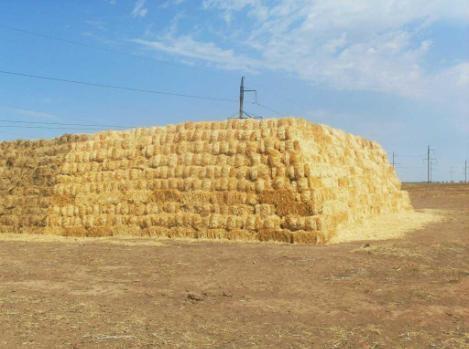 Солома зерновых культур