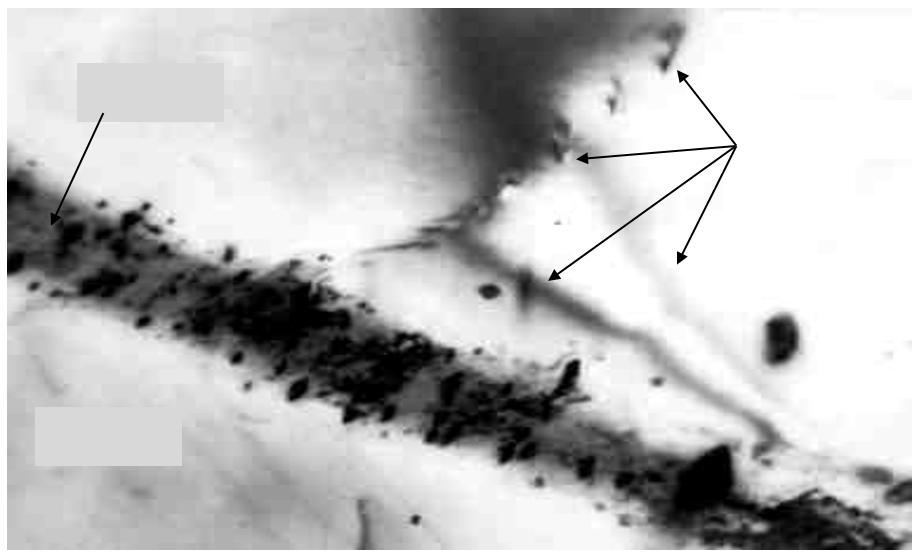 Электронноскопическая структура тонких фольг на просвет титановых сплавов марок ВТЗ-1 и ВТ18У