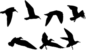 Эпизоды полета птиц