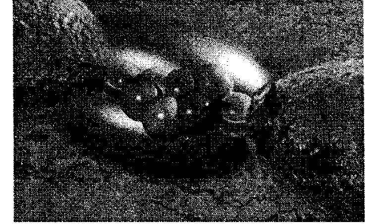 Одна молекула, соединяющая два металлических контакта через зазор, что представляет собой предельно малое электронное устройство