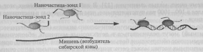 Регистрация возбудителей сибирской язвы