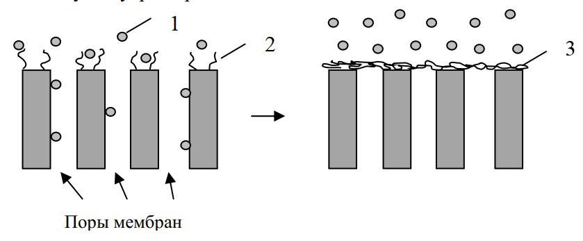 Регулируемая проницаемость мембраны при изменении конформации полимера