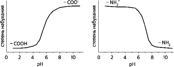 Влияние рН на набухание геля с группами слабой кислоты (слева) и с группами слабого основания
