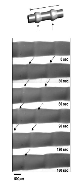 Временной ход перистальтического движения геля в соответствии с протеканием БЖ-реакции