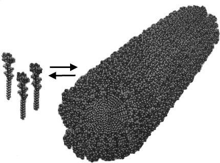 Самособирающийся молекулярный шаблон искусственной кости
