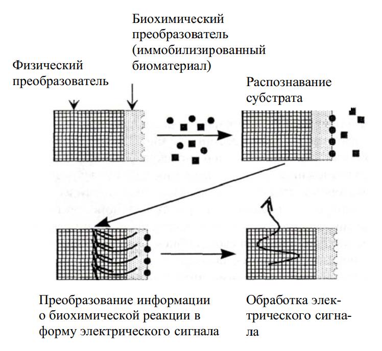 Схема действия биосенсора