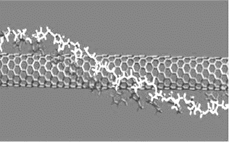 Одностенная углеродная нанотрубка, обернутая молекулой одноцепочечной ДНК