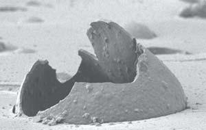 Разорванная микрокапсула, встроенная в полимерную матрицу