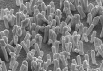 Микрофотография «нанотравы» из золотых стержней