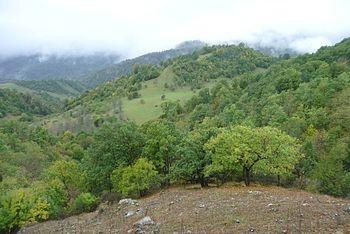 Рекреационные леса в горах