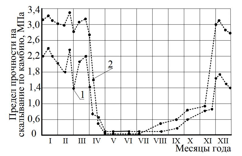 Сила сцепления коры в зависимости от времени года
