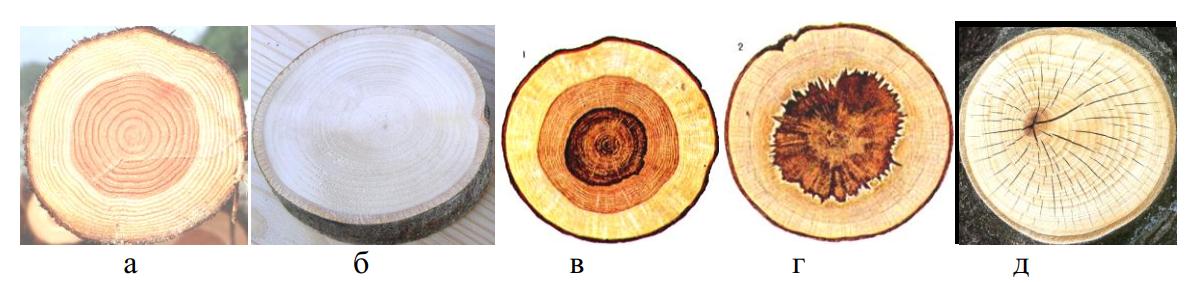 структуры пород деревьев
