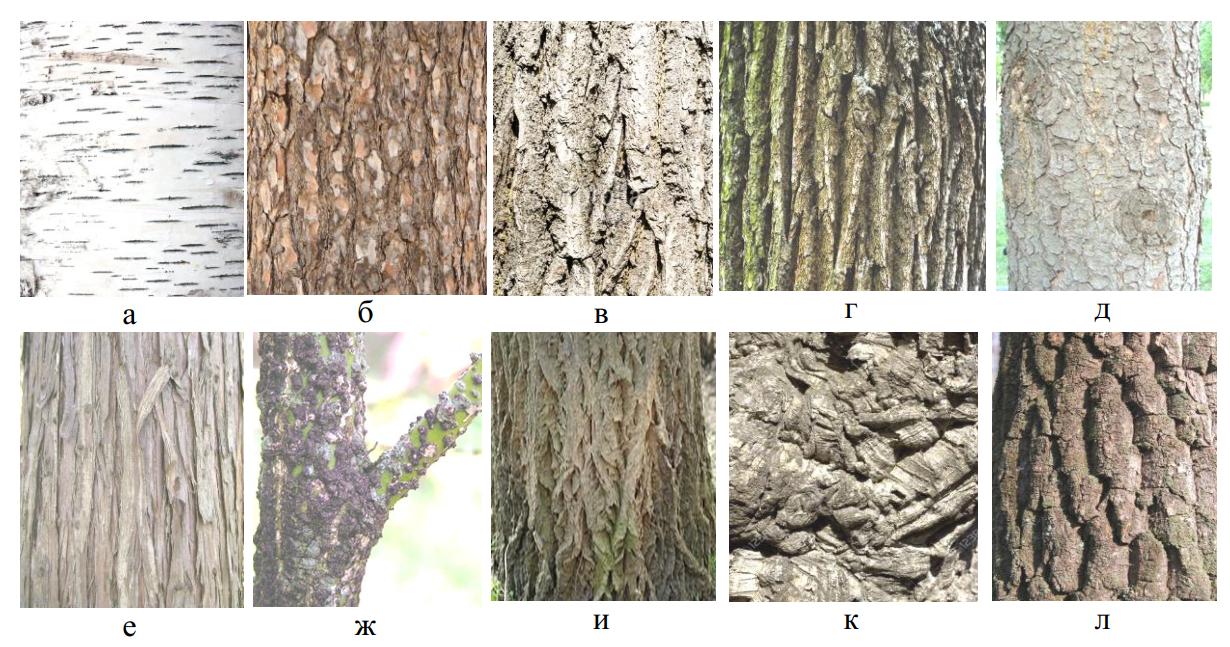 Виды древесной коры