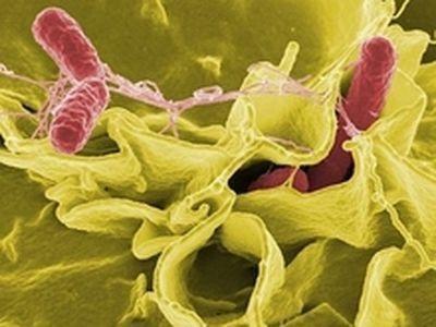 Химические вещества, физическое излучение или онкогенные вирусы, называемые канцерогенами