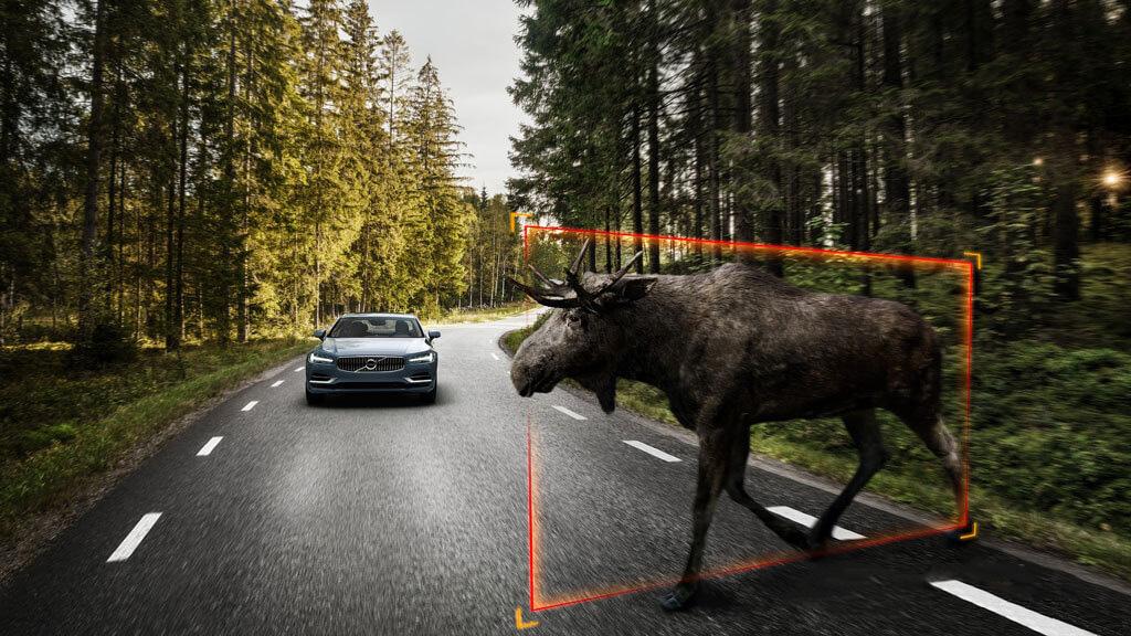 Система обнаружения крупных животных