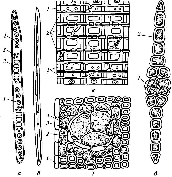 Анатомические элементы древесины хвойных пород (сосны)
