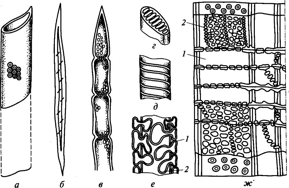 Анатомические элементы древесины лиственных пород