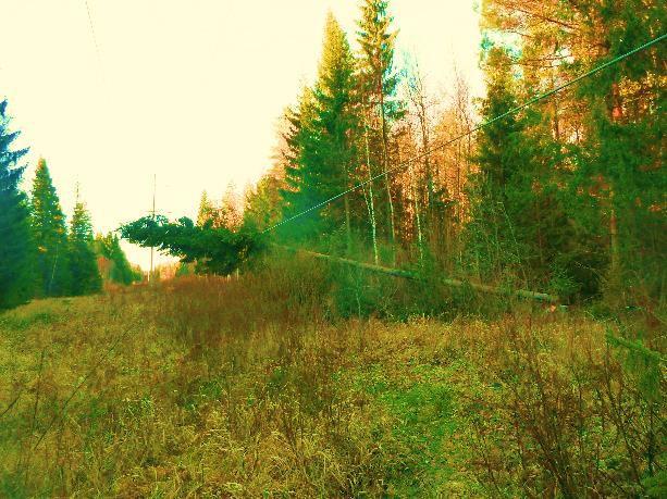 падение деревьев на провода ВЛ