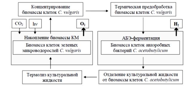 получение водорода биофотолизом воды с ипользованием биомассы клеток микроводорослей C. vulgaris и бактерий C. acetobutylicum