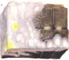 Настоящий домовый гриб Serpula lacrymans