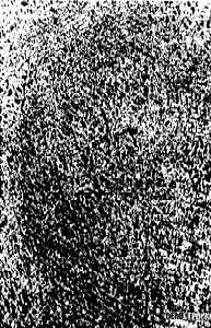 Ситовина на ели
