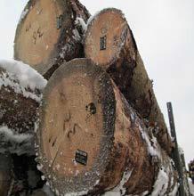 Сортовая сухостойная древесина