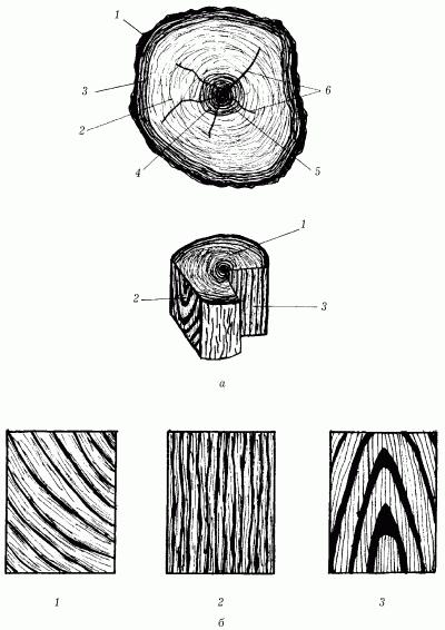 Составные части поперечного распила ствола и текстура древесины на трех разрезах