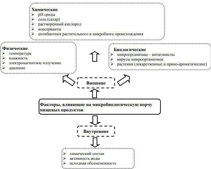 Факторы, влияющие на микробиологическую порчу продуктов