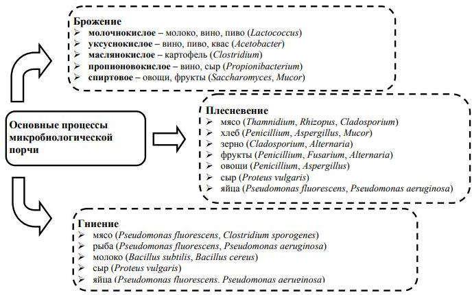 процессы микробиологической порчи и их возбудители